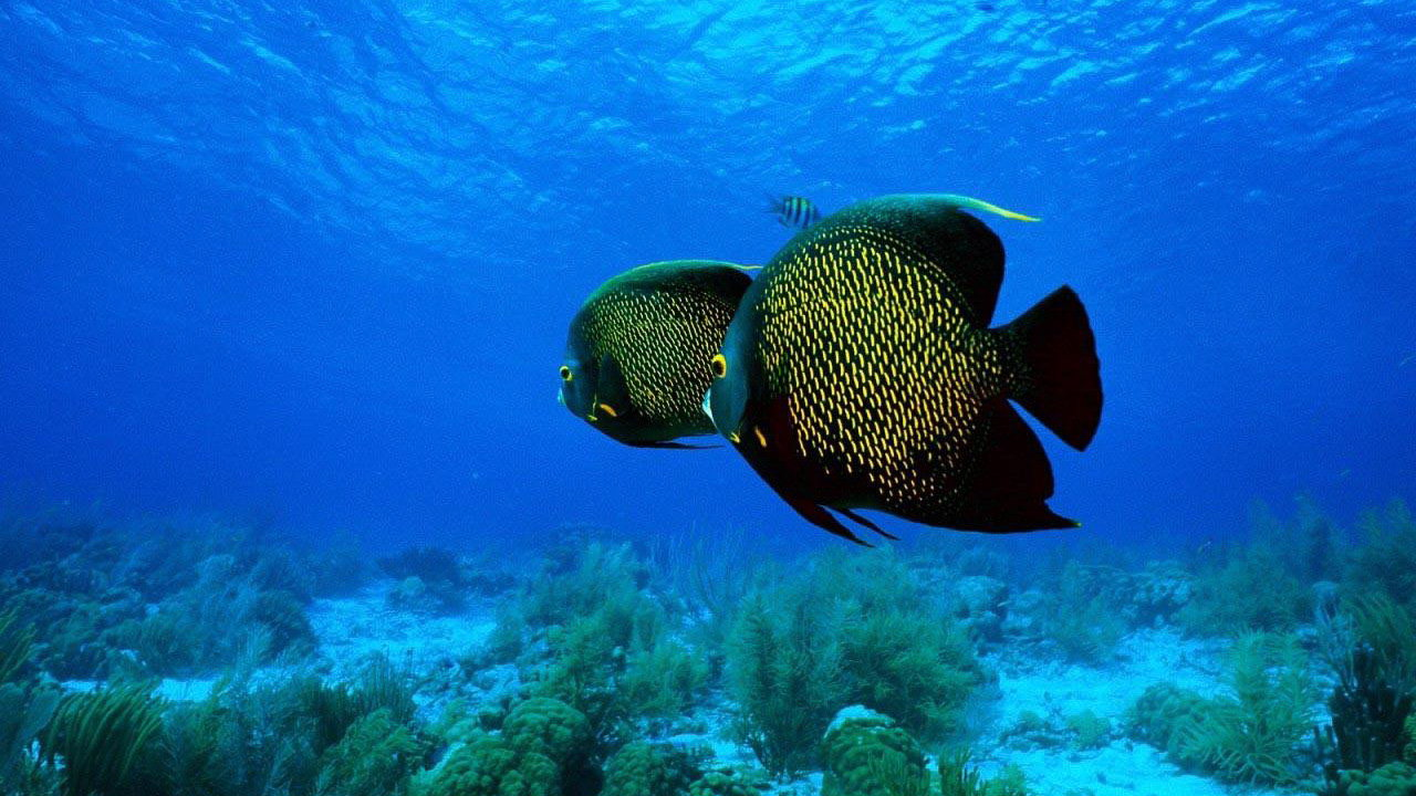 Recreational Scuba Diving - The Caribbean unerwater