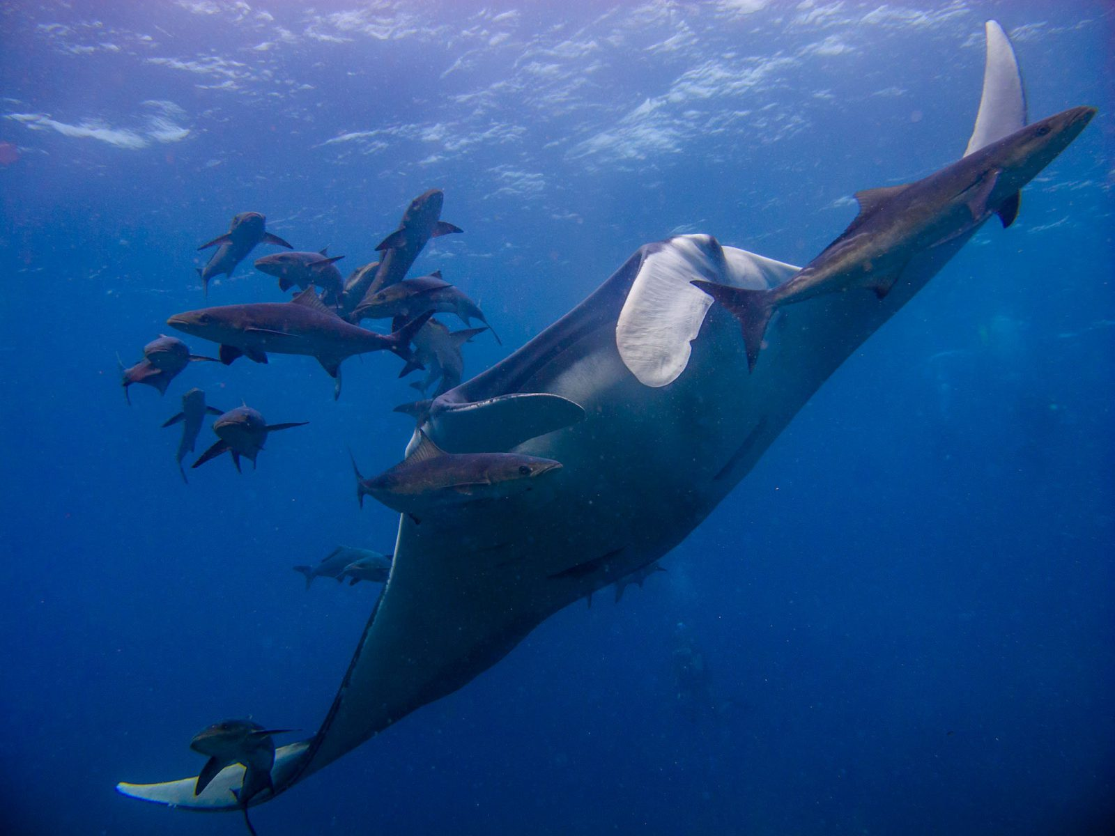 Diving in similan islands beyond phuket thailand - Where to dive in thailand ...