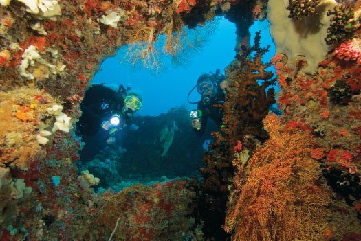Recreational Scuba Diving Phuket - Buddy devirs in corals