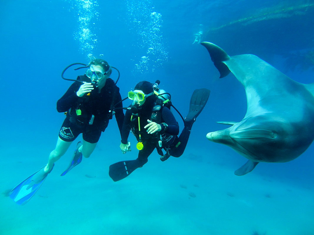 Recreational Scuba Diving - dolphin