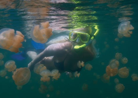 Jelly fish snorkeling