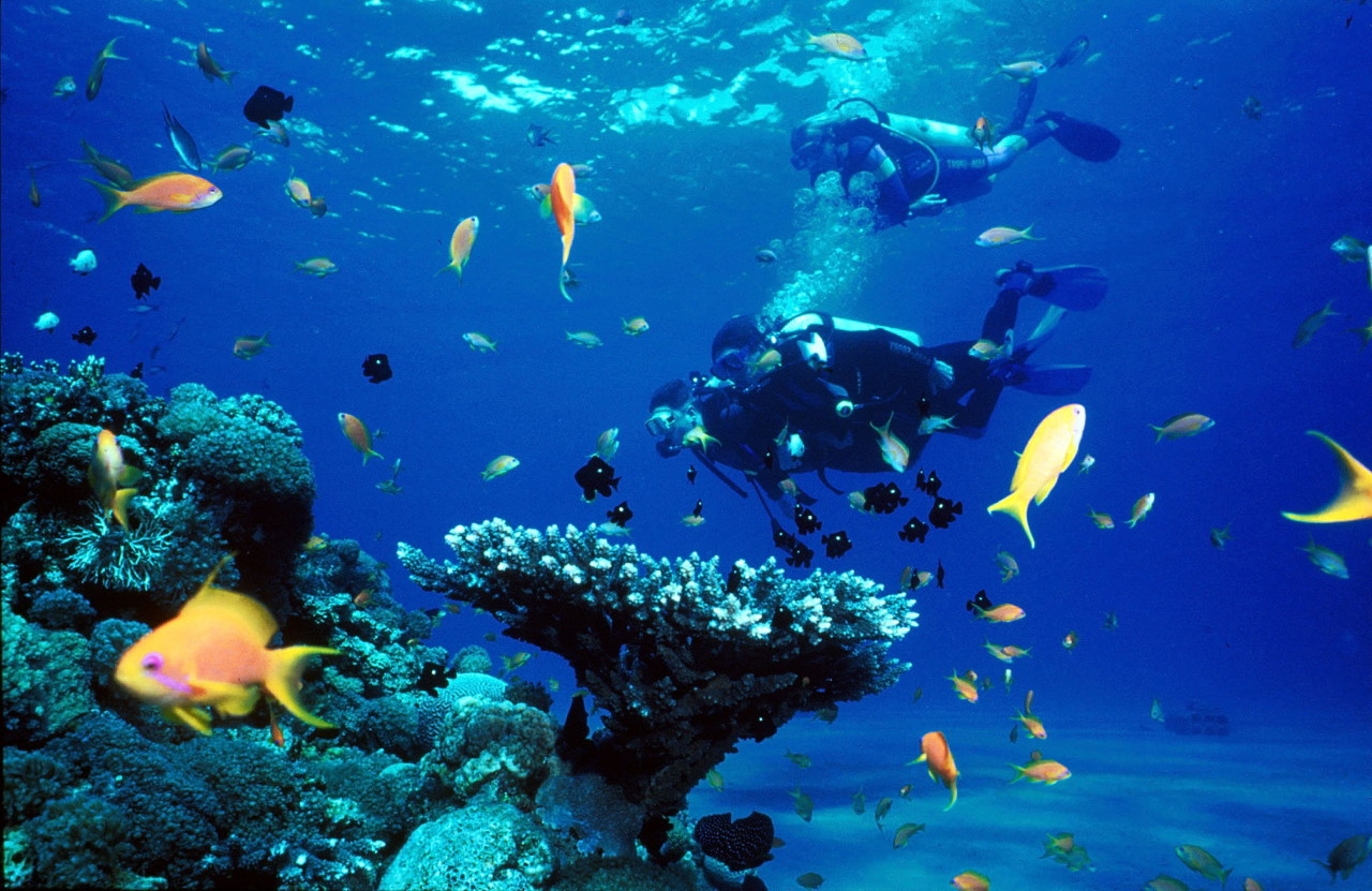 Recreational Scuba Diving - Red Sea
