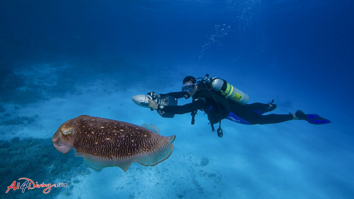 Top 10 scuba diving specialties to learn in thailand all4diving - Where to dive in thailand ...