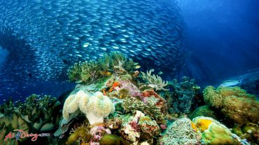 Scuba Diving Specialties - Coral Reef Conservation