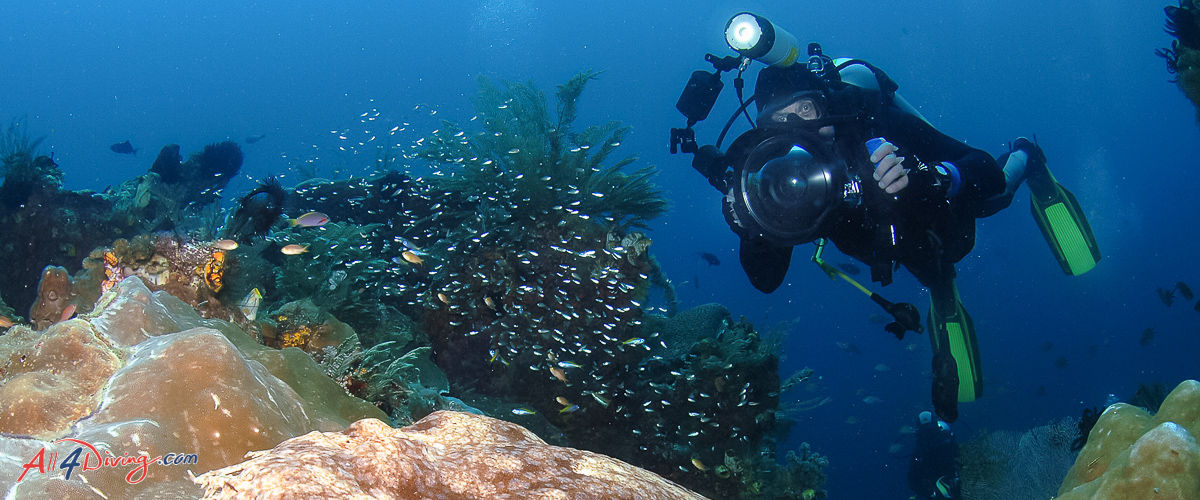 Top 10 Scuba diving specialties in Thailand-13