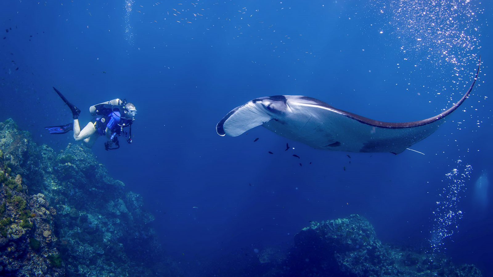 All4Diving® Scuba Diving Phuket Thailand • Best Phuket