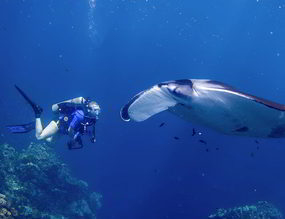 Phuket diving trips touch menu