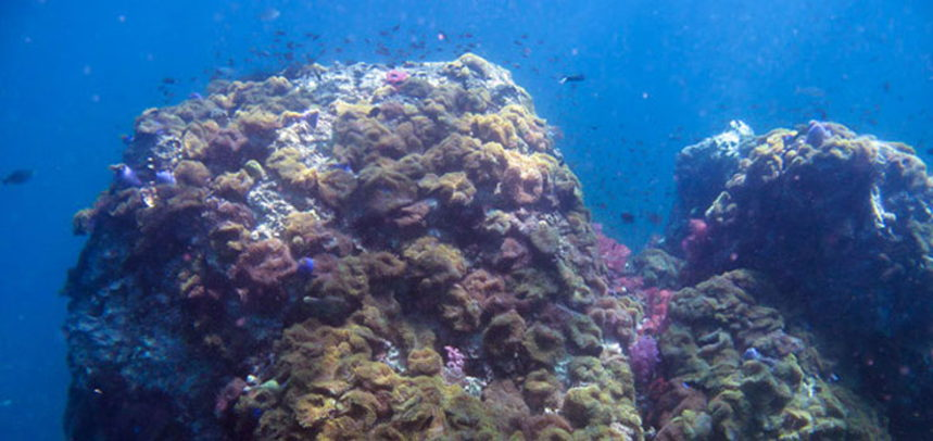 Anemone Reef diving - top view
