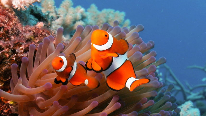 Discover Scuba Diving Phuket - Nemo
