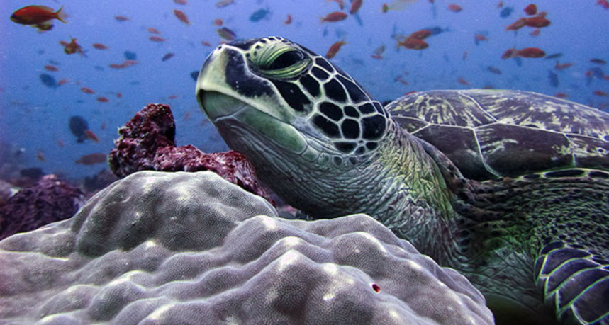 Phi Phi Islands Diving - Ko Phi Phi Leh Sea Turtle