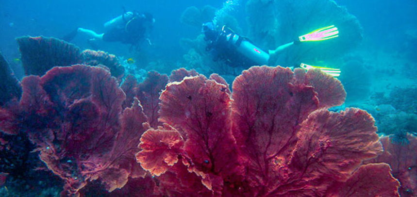 Shark Point diving - Sea Fan corals