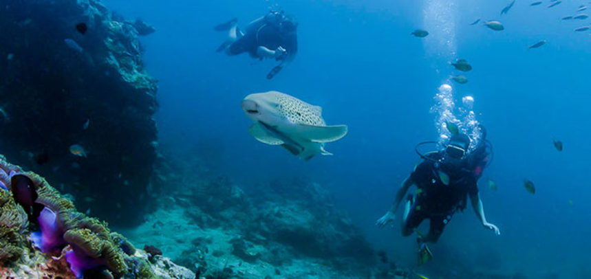 Shark Point diving - fun divers