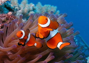 PADI Digital Photography Specialty
