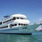 Scuba Diving Phuket - MV Pawara Liveaboard by All4Diving (7)