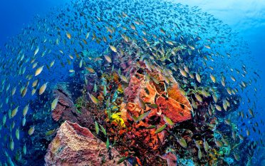 Similan Islands Liveaboard - Diving Topography