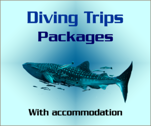 Diving Trips Packages